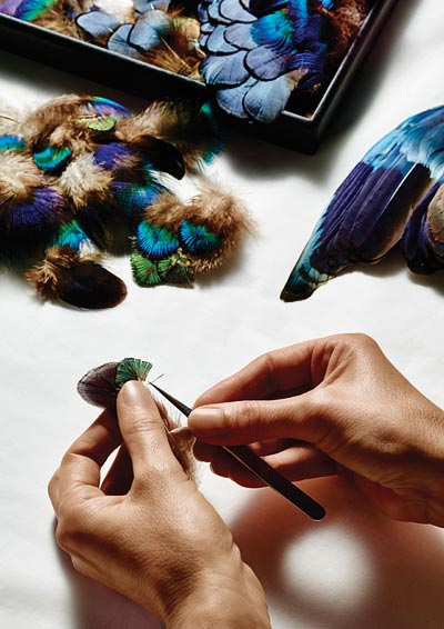 - Selecting peacock feathers