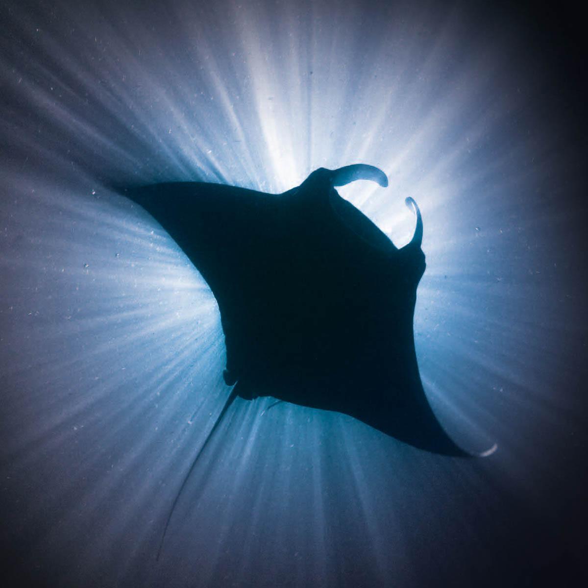 La Cote des Montres : Photo - Blancpain X Fathoms