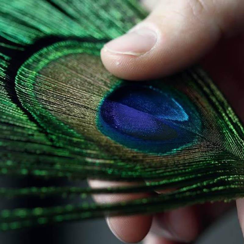 La Cote des Montres : Photo - Corum Feather Watch