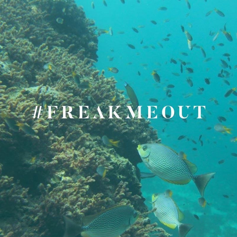 La Cote des Montres : Photo - Ulysse Nardin Freak Vision Coral Bay